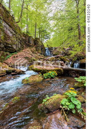 rapid water flow among the forest. trees in fresh 64810140