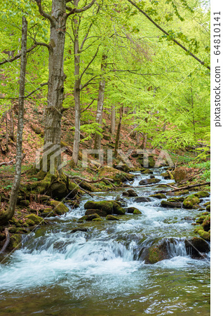 rapid water flow among the forest. trees in fresh 64810141