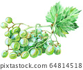 Watercolor green grape with leaf on white 64814518