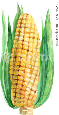 An ear of yellow corn, watercolor illustration 64814521