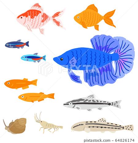 Aquarium aquarium fish set 64826174
