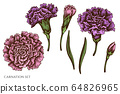 Vector set of hand drawn colored carnation 64826965