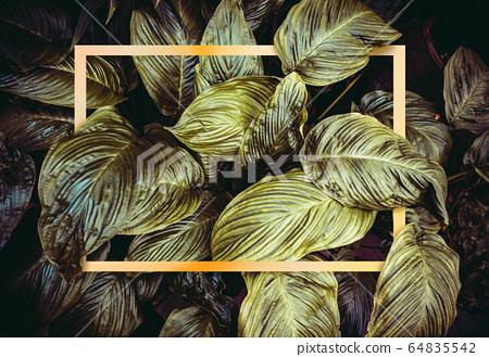 Golden frame on dark green leaves background 64835542