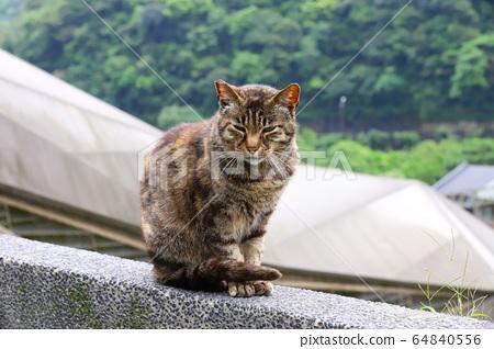 貓村自由自在的街貓 64840556