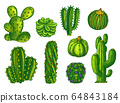Cactus and succulents, agave sketch plants vector 64843184