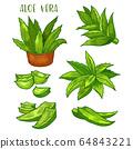 Aloe Vera plant leaves, sketch line icons 64843221