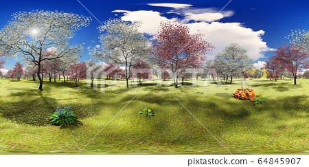 Flowering dogwood trees in orchard in spring time 3d rendering 64845907