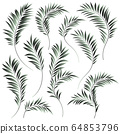 热带植物插图 64853796