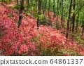 大和杜鵑花森林 64861337