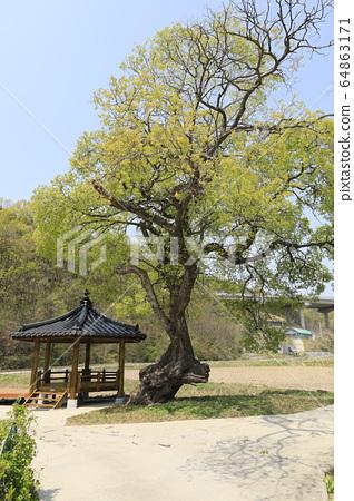 美麗的春天風景與柳樹和精子 64863171