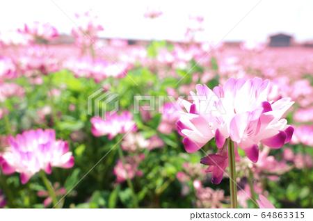 연꽃 연꽃 꽃 자연 풍경 64863315