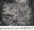 Bark skin 64866527