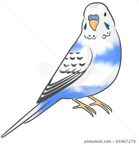 Sekisei長尾小鸚鵡 64867279