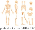 The full anatomical skeleton of a person and individual bones 64869737