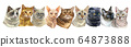 Vector illustration with cats standing in a row 64873888