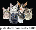 Vector illustration with cats black 64873889