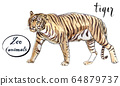 Staying striped tiger 64879737