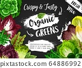 Vegetable green salads and veggie lettuces 64886992