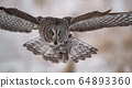 Great Grey Owl in Canada  64893360