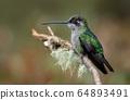 Hummingbird in Costa Rica 64893491