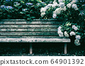 Bench and hydrangea 64901392