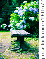 Hydrangea and bench 64901672