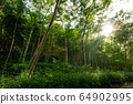 forest trees in dense green forest, nature green wood sunlight backgrounds 64902995