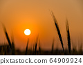 Wheat field with sunset 64909924