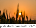 Wheat field with sunset 64909925