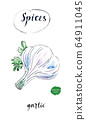Watercolor fresh bulb of garlic with leaves of parsley 64911045