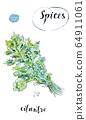 Watercolor fresh green cilantro leaves 64911061
