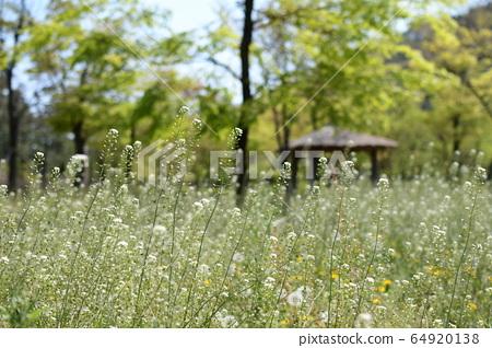 들꽃과 저 멀리 원두막 쉼터 64920138