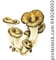 牡蠣蘑菇 64928003