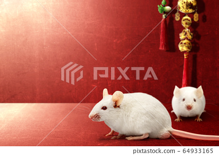 White mouse and Chinese ornament on a red background 64933165