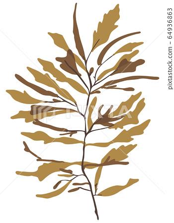 海藻棕色藻類矢量素材Akamoku 64936863