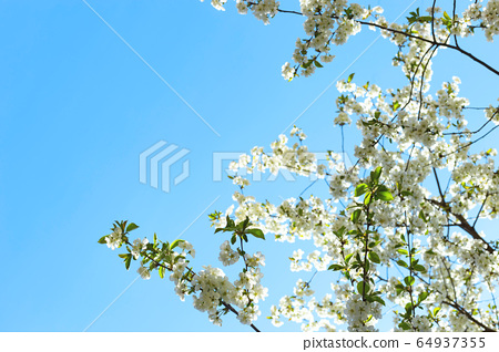 Spring concept of flowering trees, fertility and natural restoration. 64937355