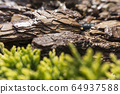 Tree bark for decoration and mulching in landscape design. Tree bark texture macro background close-up. 64937588