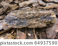 Tree bark for decoration and mulching in landscape design. Tree bark texture macro background close-up. 64937590