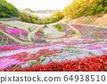 히로시마 현 후쿠야마시 우츠미 도시의 올빼미의 꽃밭에 피는 다년초 ① 64938510