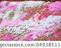히로시마 현 후쿠야마시 우츠미 도시의 올빼미의 꽃밭에 피는 다년초 ② 64938511