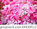 히로시마 현 후쿠야마시 우츠미 도시의 올빼미의 꽃밭에 피는 다년초 ③ 64938512