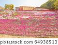 히로시마 현 후쿠야마시 우츠미 도시의 올빼미의 꽃밭에 피는 다년초 ④ 64938513