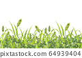 Field of cat seal and clover 64939404
