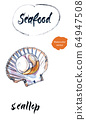 Opened scallop, mussel, seafood. Hand drawing of scallop as a common seafood delicacy. Edible underwater scallop, healthy organic shellfish food, hand drawn watercolor illustration 64947508