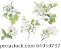 White flowering dogwood on branch watercolor 64950737