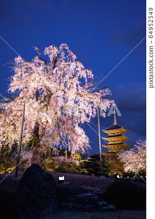 교토 도지 수양 벚나무 64952549