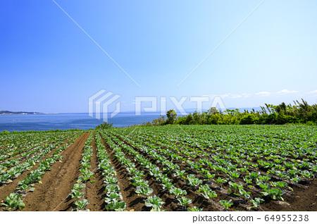 밭 (봄) 64955238