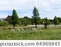 목장 양떼들 64960645
