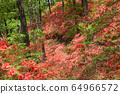大和杜鵑花森林 64966572