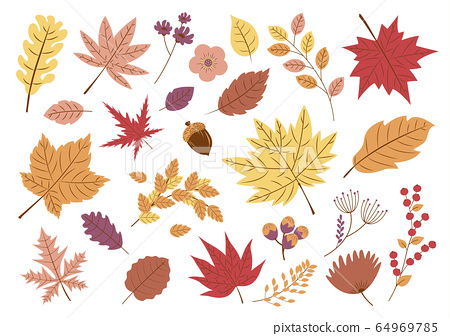 Autumn leaves on white background 64969785